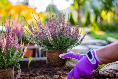 cebule kwiatowe jesienne