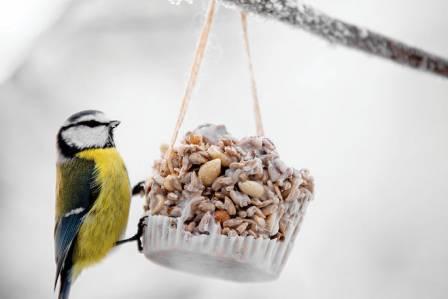Czym karmić ptaki