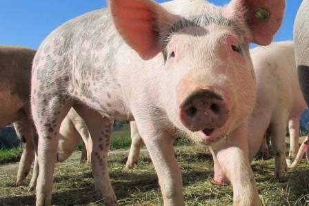 Dlaczego warto zostać wegetarianinem?