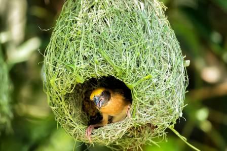 gniazda ptaków