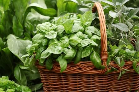 jakie warzywa siać w czerwcu