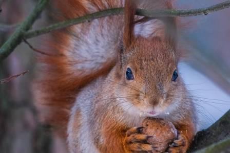 jakie zwierzęta szykują jesienią zapasy