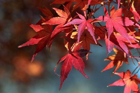 dlaczego jesienią liście zmieniają kolor