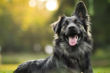 Kleszcz u psa – pierwsza pomoc