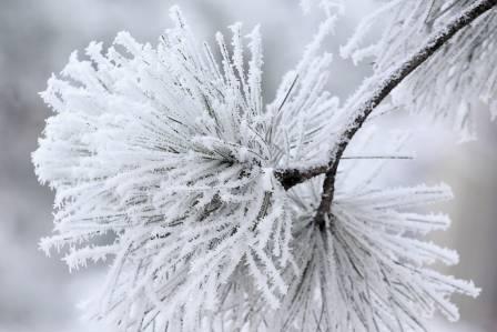 las zimą