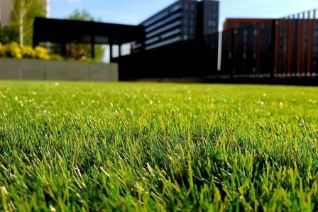Zadbany trawnik przed domem