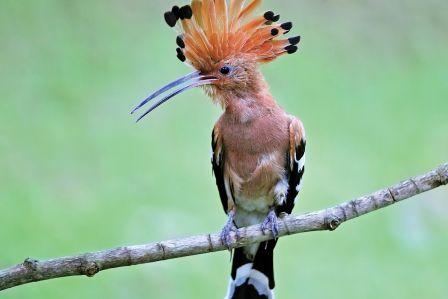 rodzaje piór ptaków