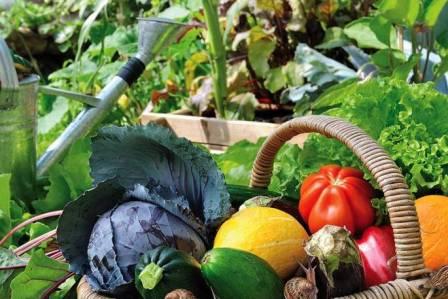 Sposób na urodzaj, plagę ślimaków i dłuższe życie kwiatów. Zakładamy ogródek warzywny – odcinek piąty