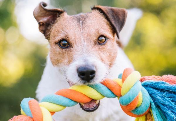 data/articles/Grunt to fajna zabawa, czyli jak zrobić samemu zabawki dla psa