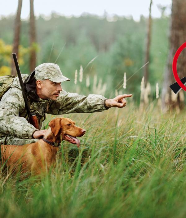 data/articles/Dość polowań na dziki i zwierzynę: do końca marca można wyłączyć swoją działkę z obwodu łowieckiego