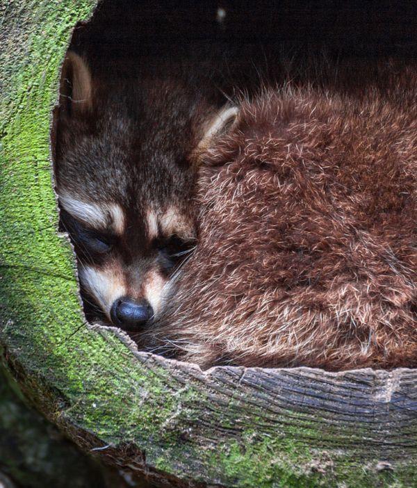 data/articles/jakie zwierzęta zapadają w sen zimowy