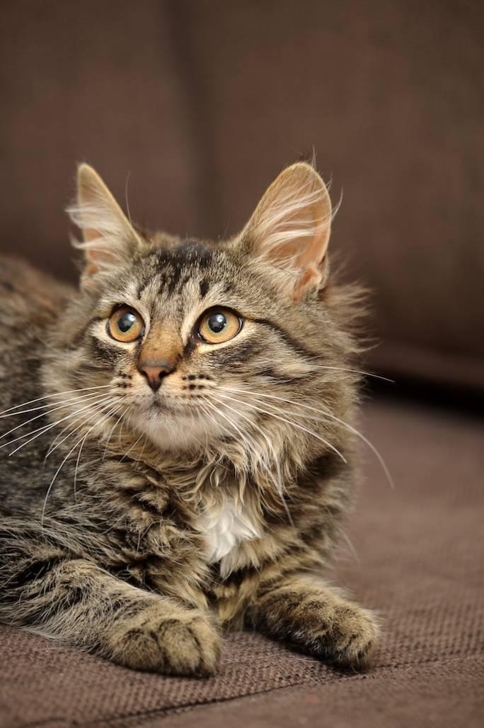 jak oduczyć kota sikania w domu