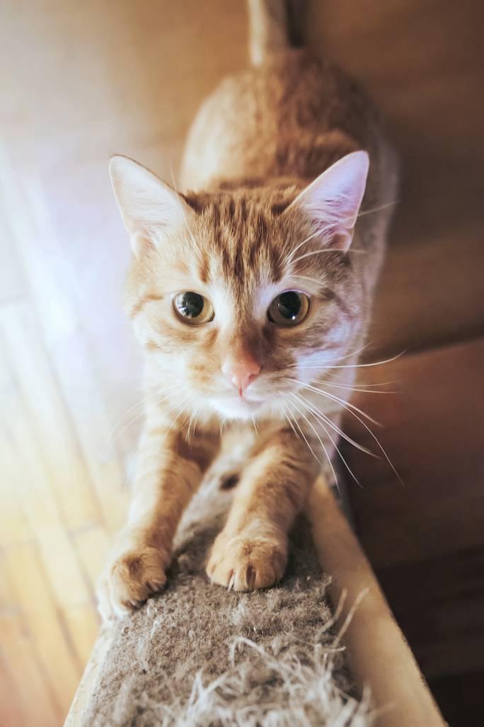 kot sika w domu