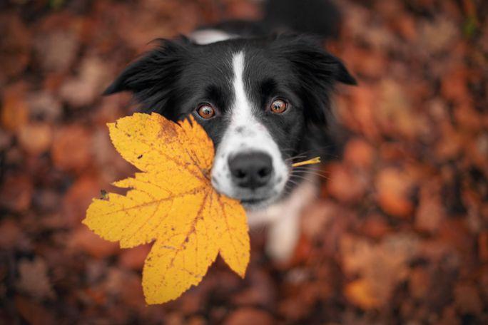 dlaczego liście zmieniają kolor jesienią