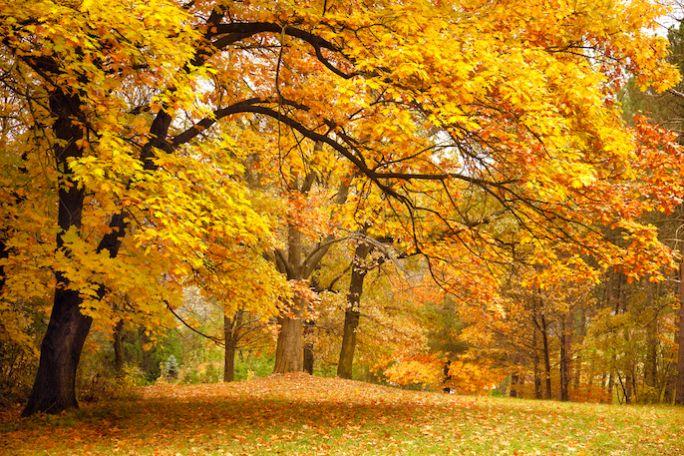 liście drzew jesiennych