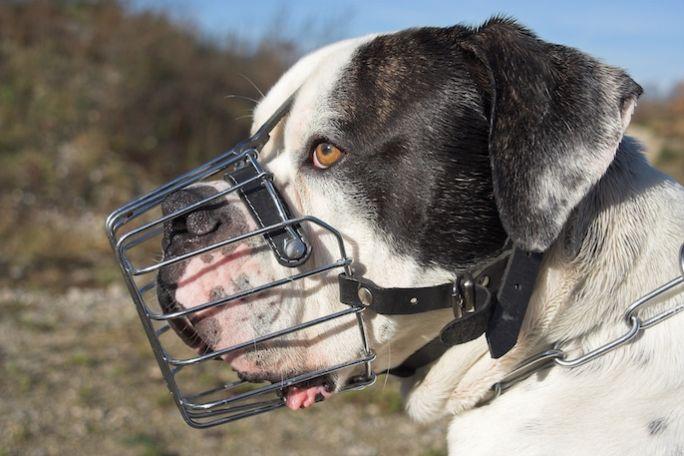 kaganiec dla psa metalowy