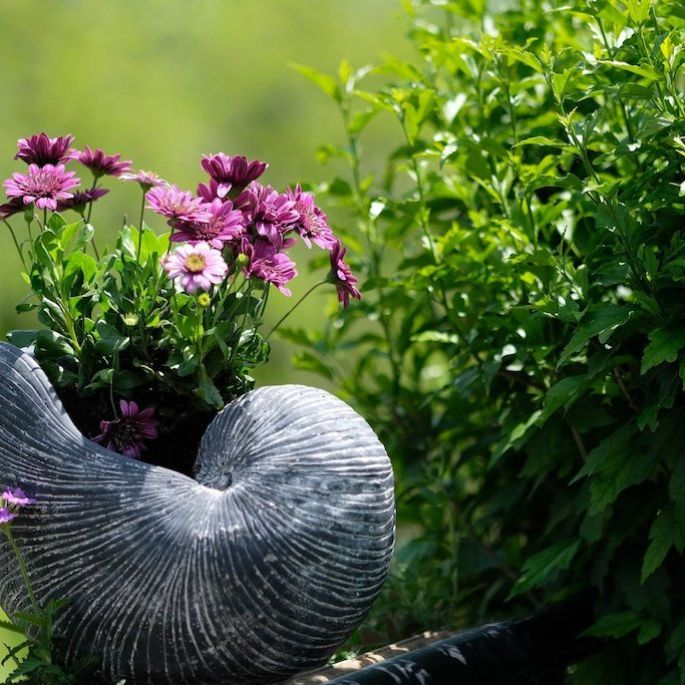 trawy ozdobne do ogrodu