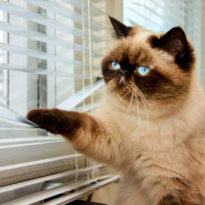 czy koty tęsknią