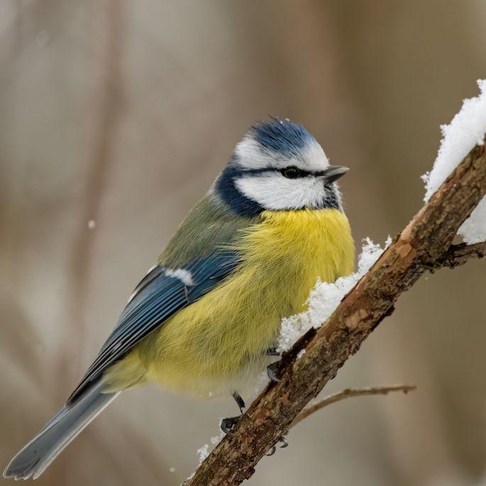 zwierzęta aktywna zimą