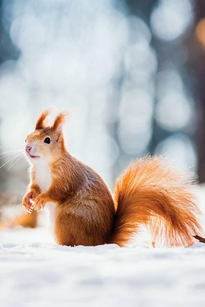 Wysypuj wiewiórkom orzechy.