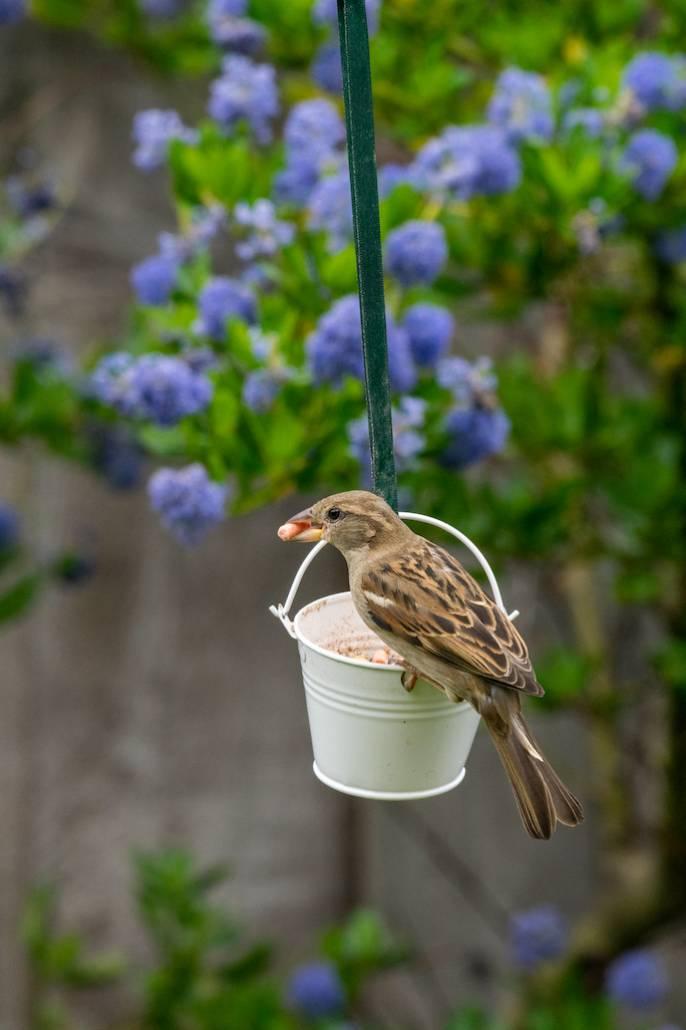 Ptaki potrzebują naszej pomocy nie tylko zimą.