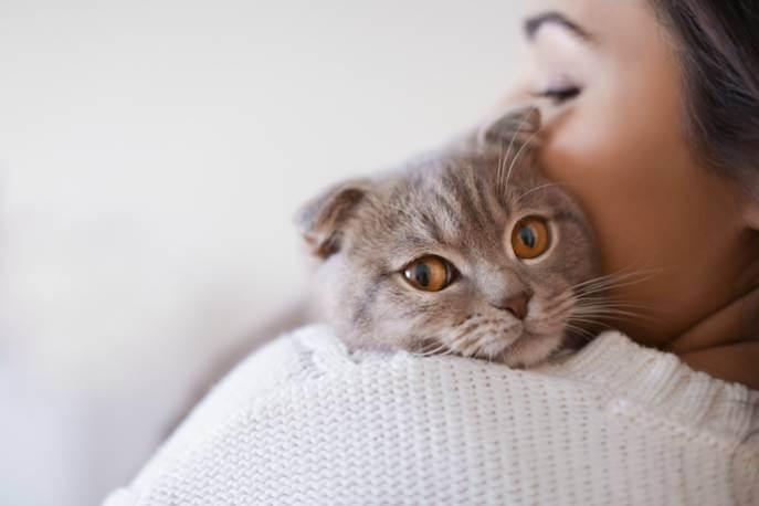 Pozwól kotu zadecydować, czy ma teraz ochotę być noszony na rękach.