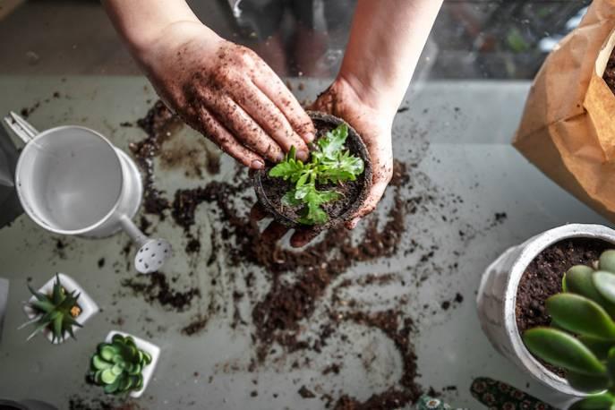 Naturalny nawóz do kwiatów możesz zrobić z resztek jedzenia.