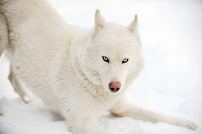 Pomóż psom przetrwać zimę
