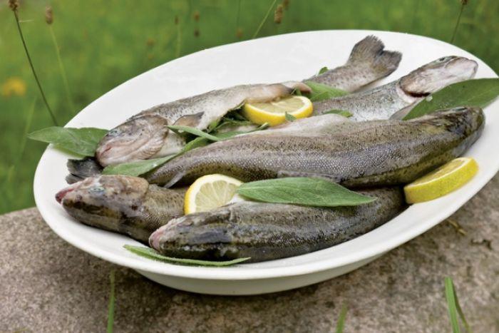 Wędzenie ryb