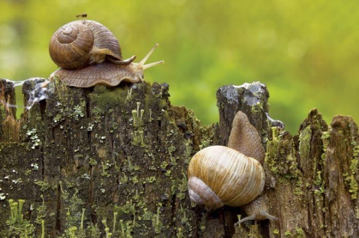 Akcja ślimak