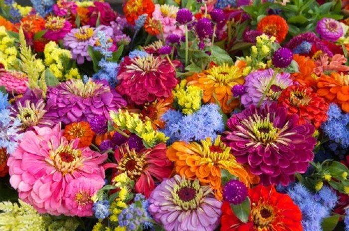 Mowa kwiatów