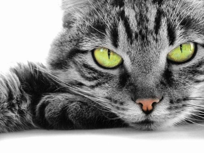 Koty Grzegorza Turnaua