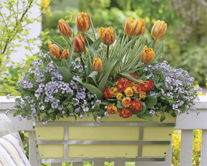 Wejście z kwiatów