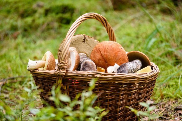 Grzybobranie, czyli jak zbierać grzyby