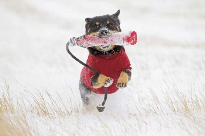 Ubieramy psa na zimę