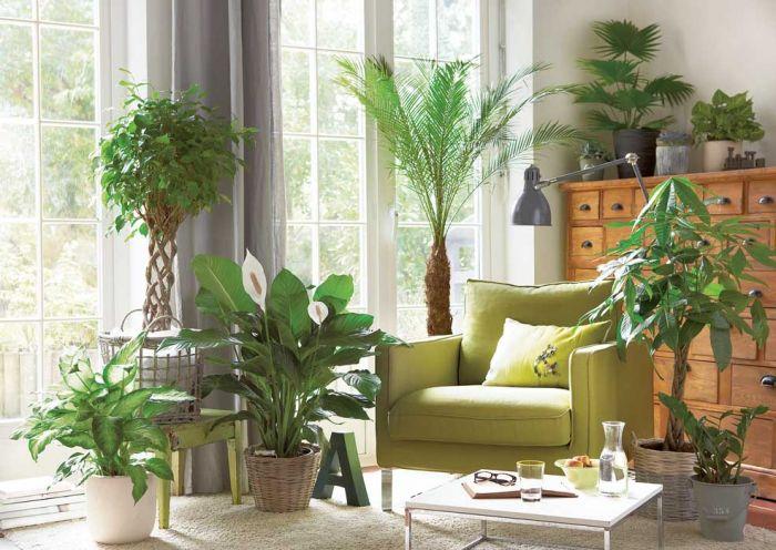 Domowa oczyszczalnia z roślin