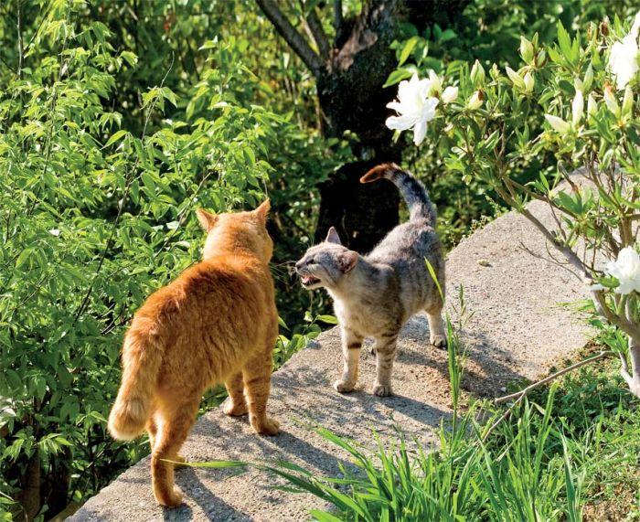 Marcowe koty