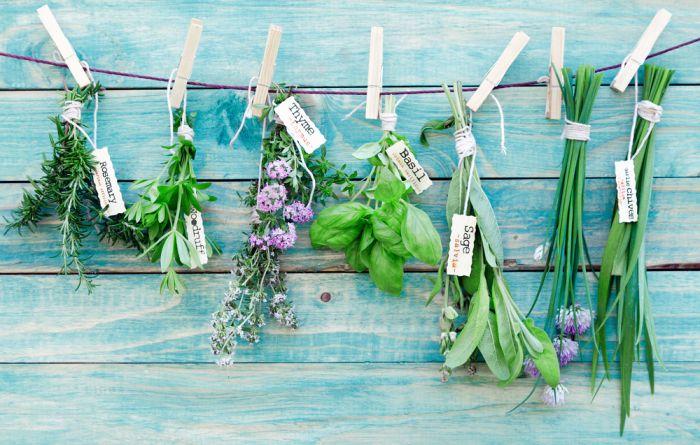 Zbieramy ziołowe kwiaty