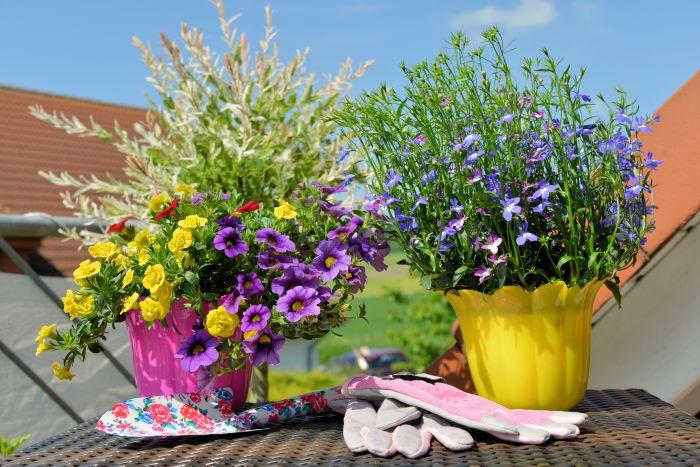Jak uprawiać rośliny na balkonie?