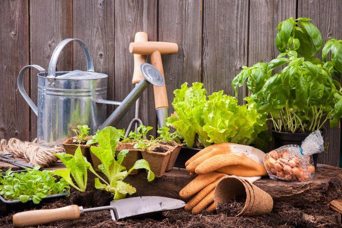 Kuchenne odpadki, które pokocha twój ogród