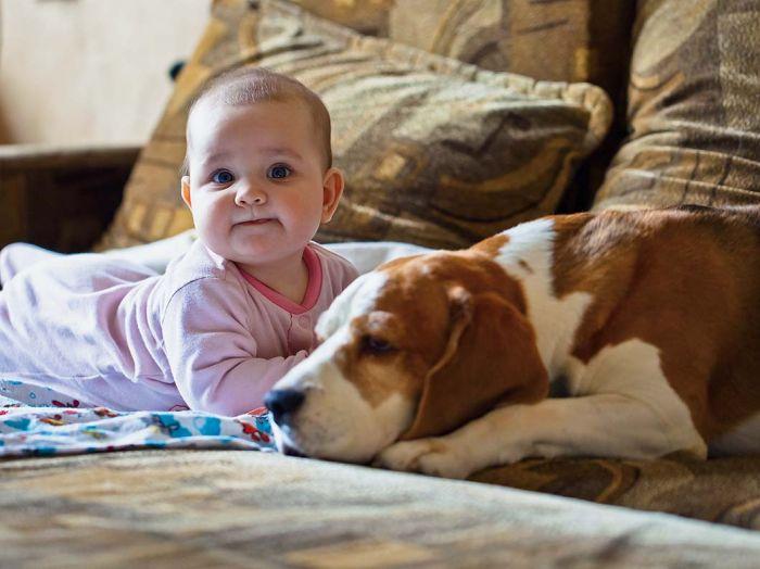Pies i bobas w jednym domu