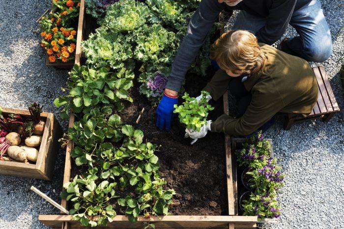 Jakie warzywa sadzić obok siebie? Zakładamy ogródek warzywny - odcinek drugi