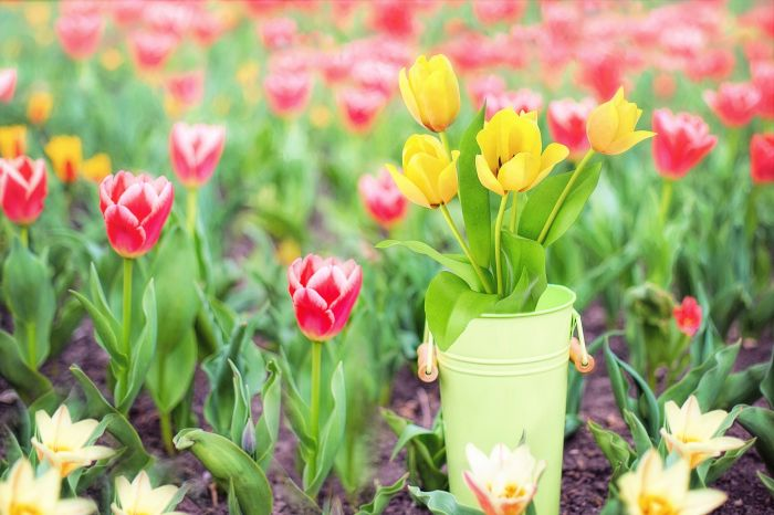 Prezent na Dzień Matki – sprawdź symbolikę kwiatów, które chcesz dać ukochanej osobie