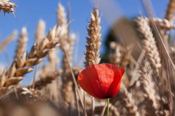Sierpień – imieniny obchodzą…