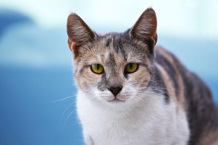 Czy kot znajdzie drogę do domu?
