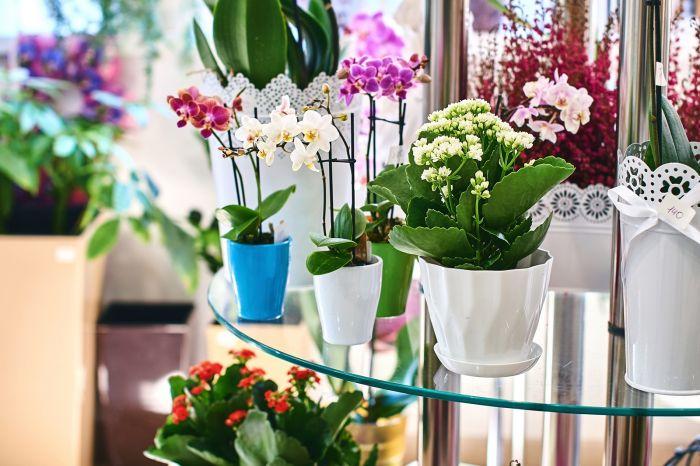 Najpiękniejsze kwiaty doniczkowe do wnętrz
