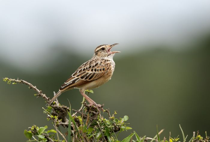 Jakie ptaki zwiastują wiosnę?