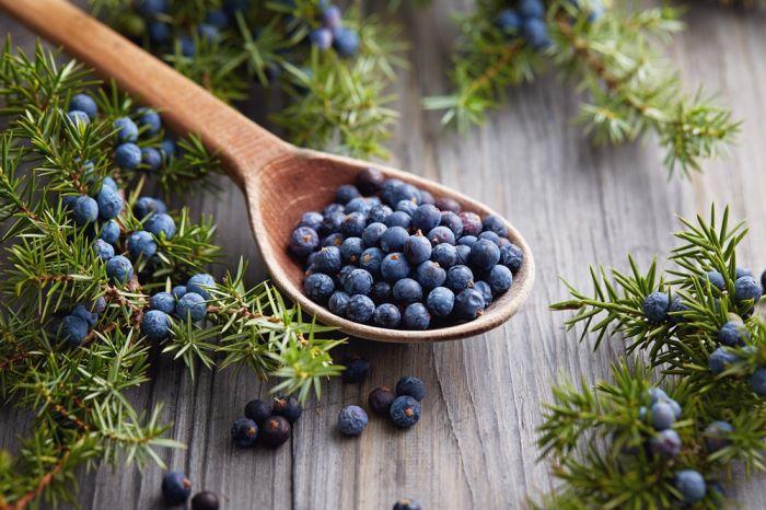 Jałowiec – dla zdrowia i dla smaku