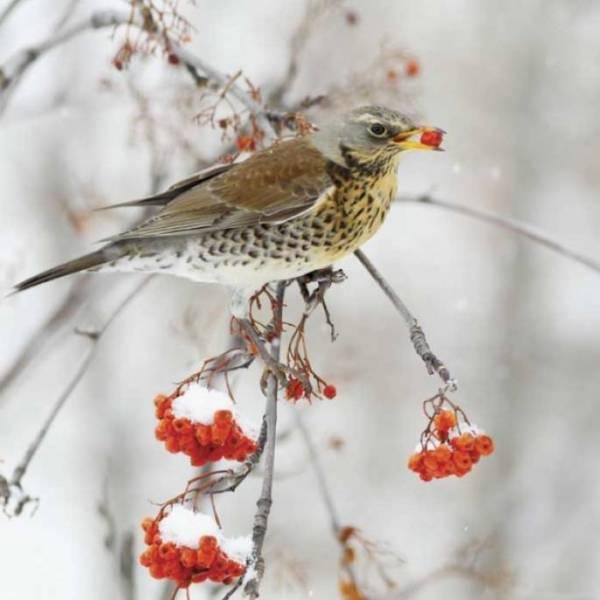 czym karmić ptaki zimą