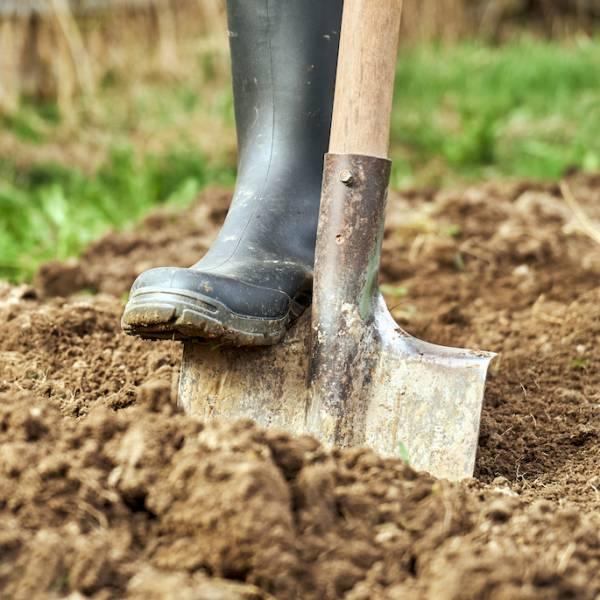 jak przygotować ziemię pod warzywa
